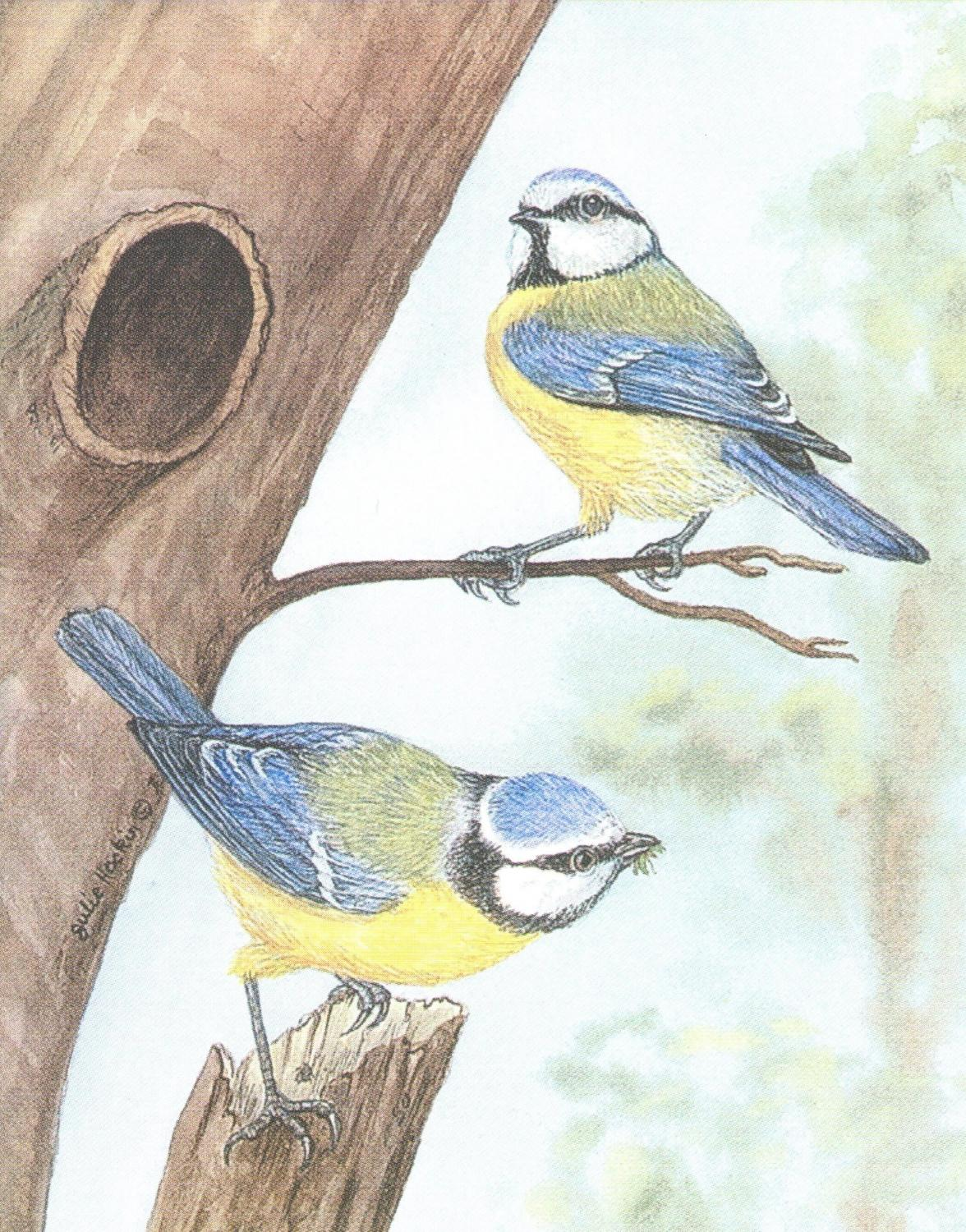 Small Card - Blue Tit