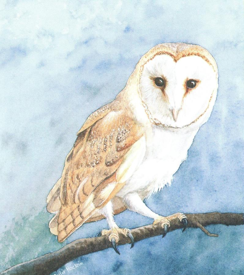 Small Card - Barn Owl