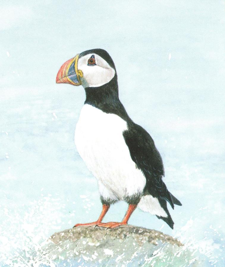 Small Card - Puffin