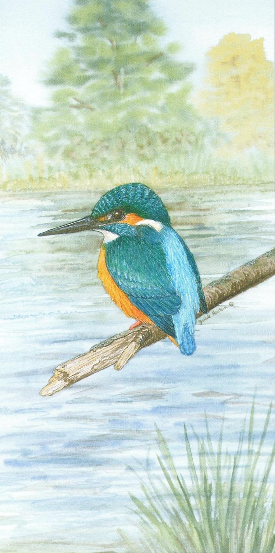 Money Card - Kingfisher