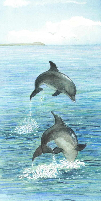 Money Card - Dolphin
