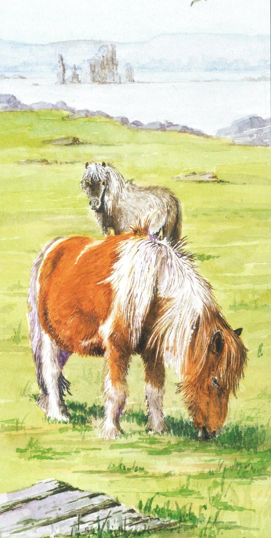 Money Card - Shetland Pony