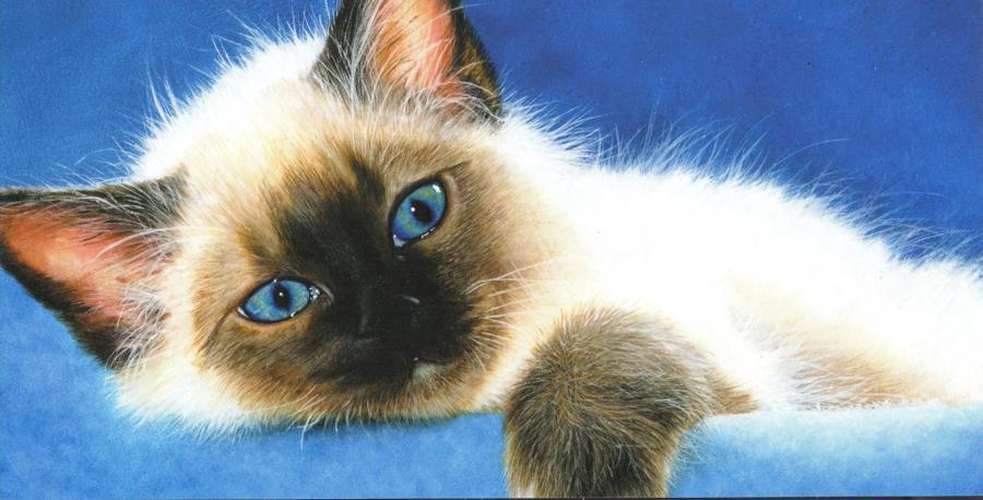 Money Card - Ole Blue Eyes
