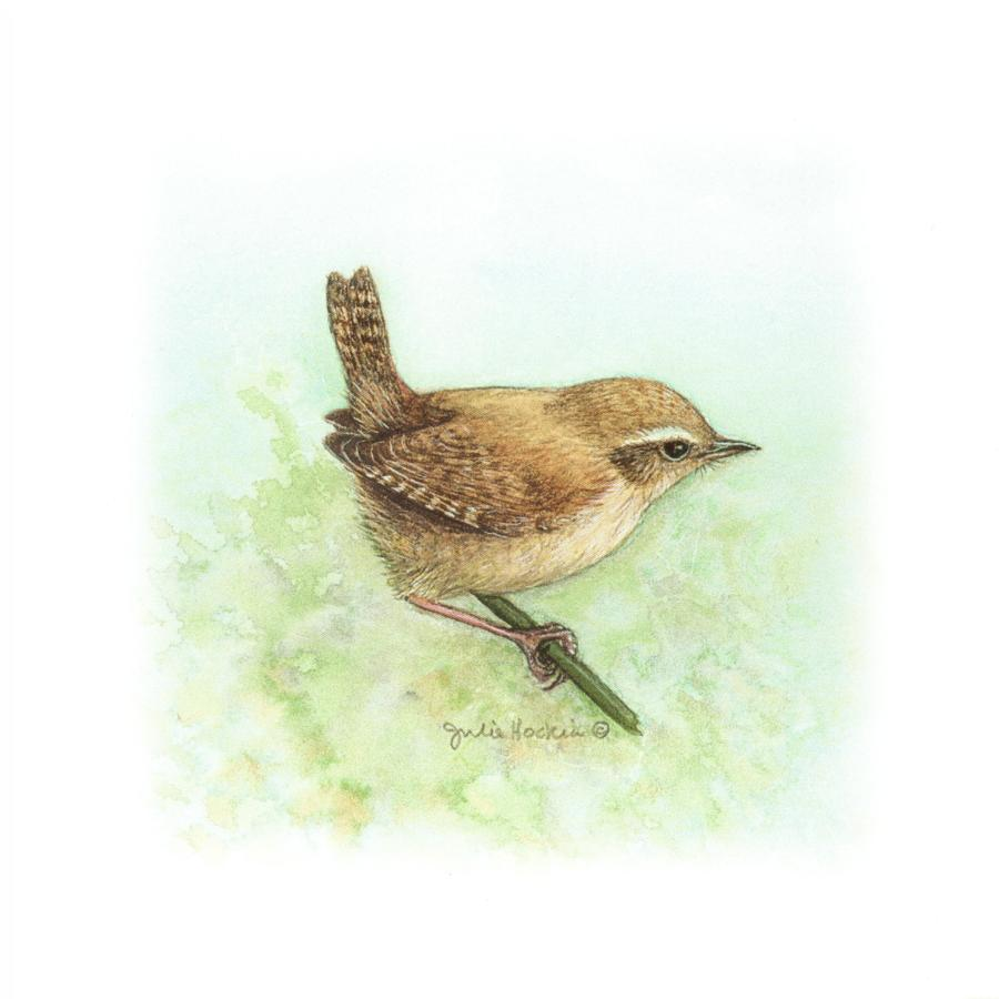 Square Card - Wren