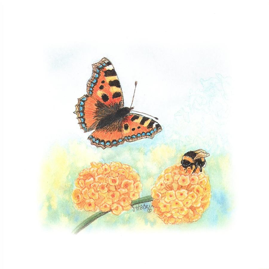 Square Card - Tortoiseshell Butterfly