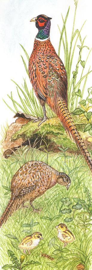 Bookmark - Pheasants