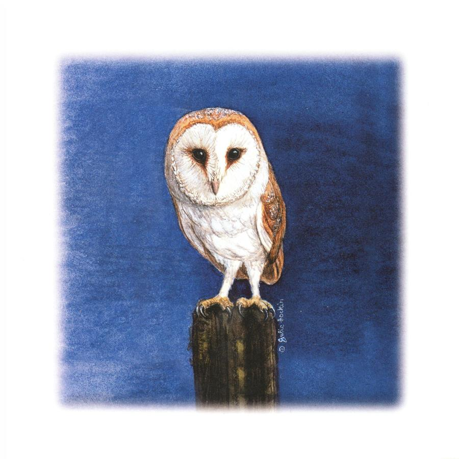 Square Card - Barn Owl