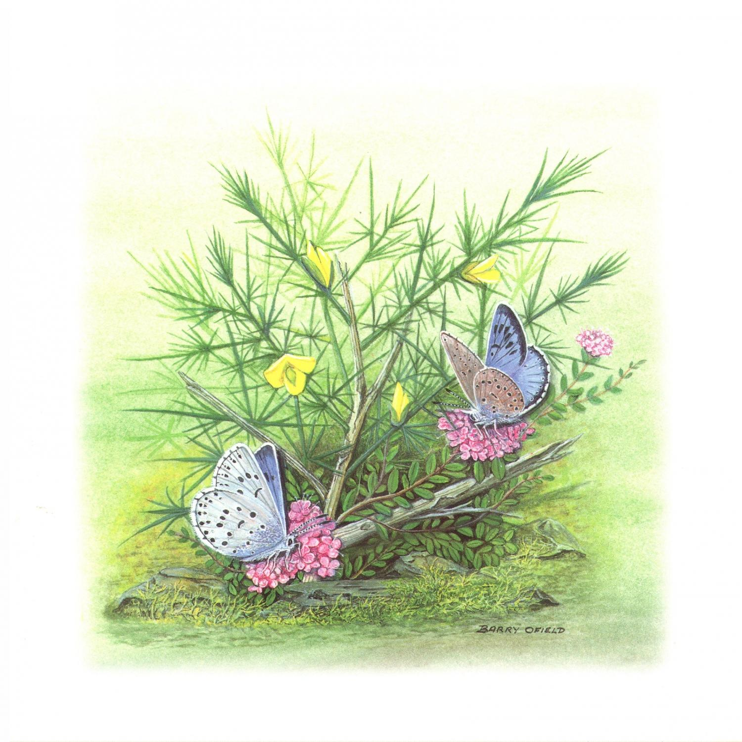 Square Card - Large Blue Butterfly