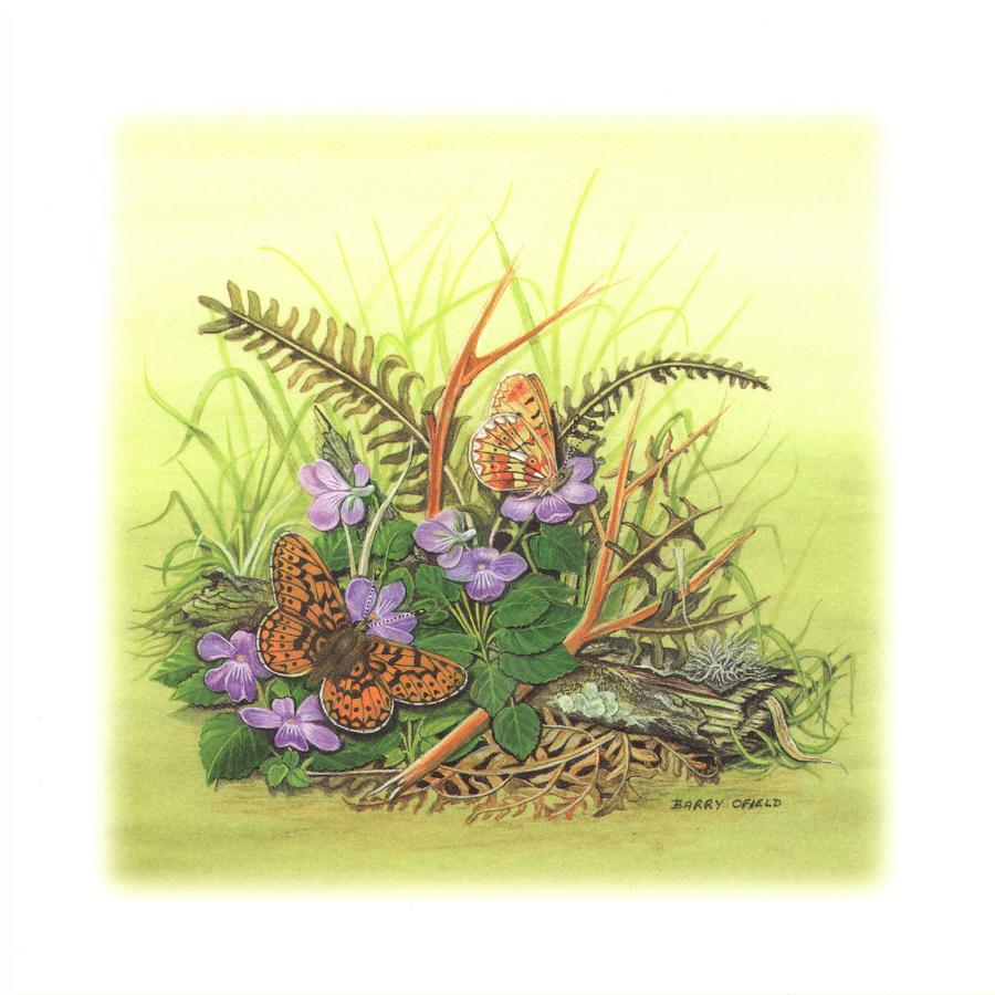 Square Card - Pearl Bordered Fritilary