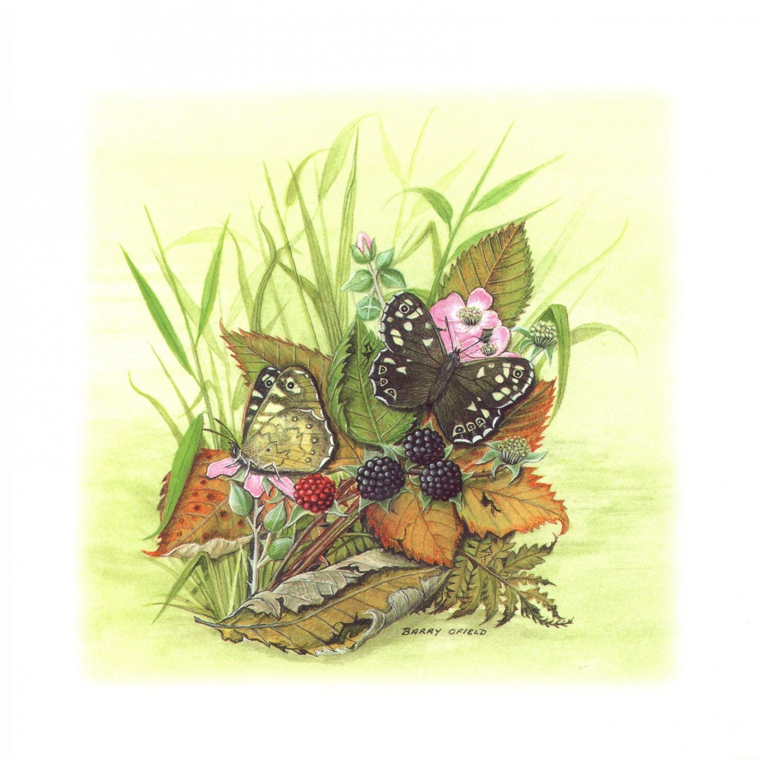 Square Card - Speckled Wood Butterfly