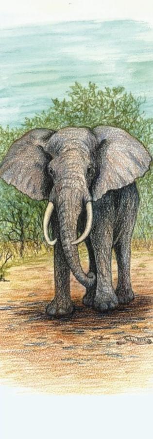 Bookmark - Elephant