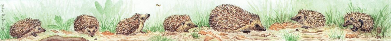 Ruler - Hedgehogs