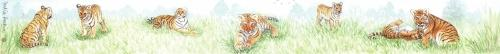 Ruler - Tigers