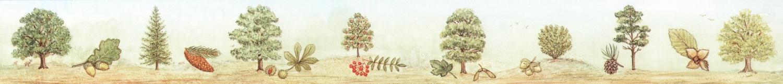 Ruler - Trees