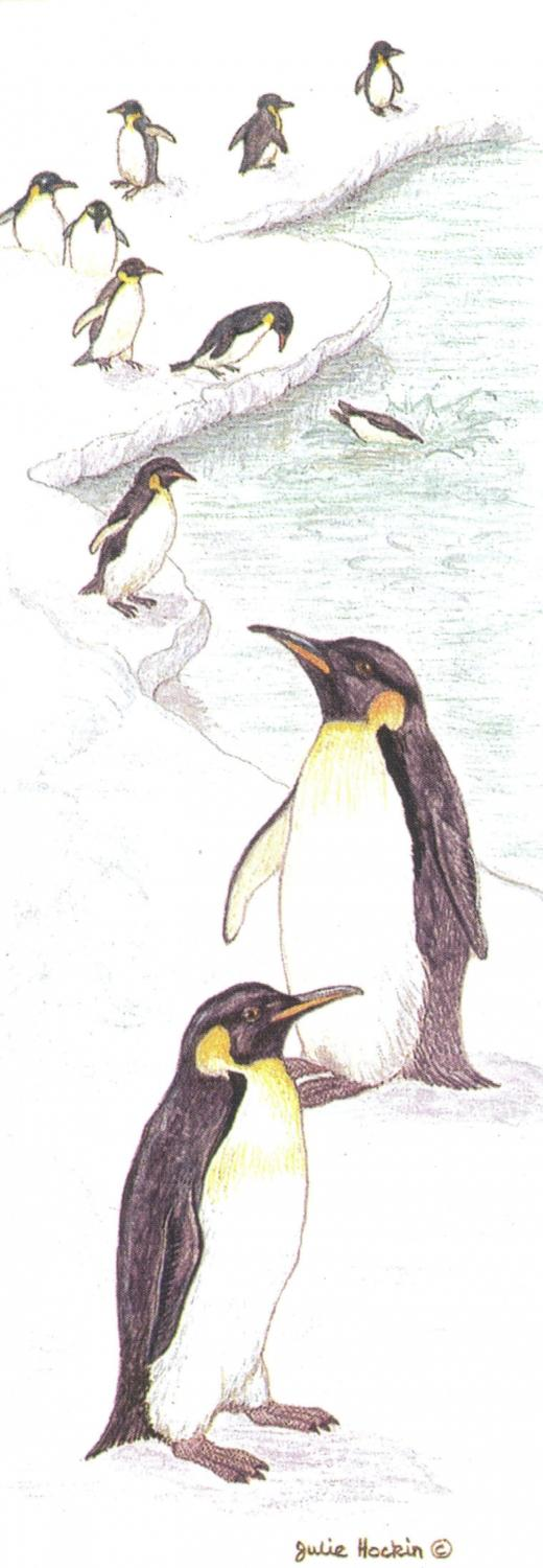 Bookmark - Penguins