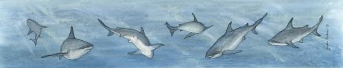 Ruler - Shark