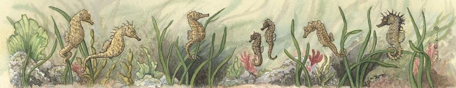 Ruler - Seahorse