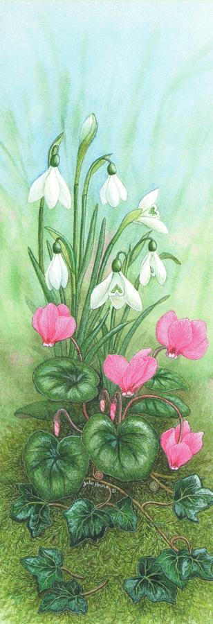 Pen & Pad Set - Cyclamen & Snowdrop