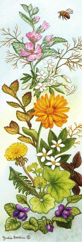 Bookmark - Cosmetic Herbs