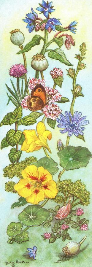 Bookmark - Culinary Herbs