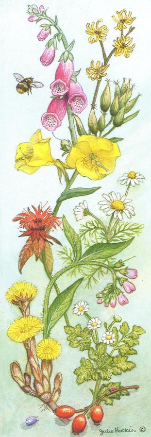 Bookmark - Medicinal Herbs