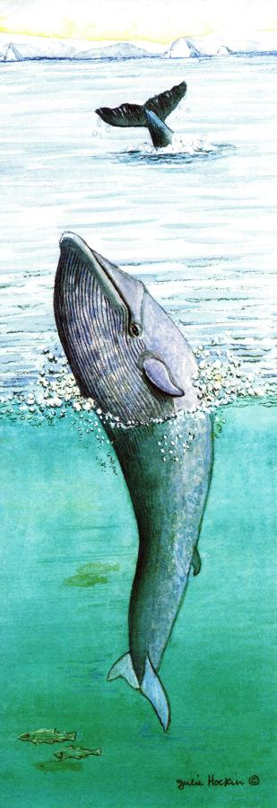Bookmark - Blue Whale